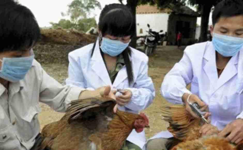 dại dịch cúm a